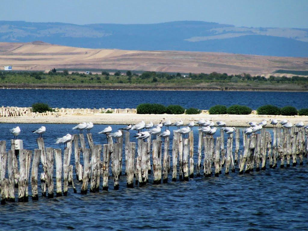 """Среща на тема """"Замърсяване на Поморийско езеро с отпадъци"""""""
